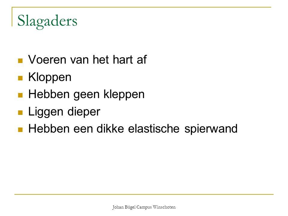 Johan Bügel Campus Winschoten Slagaders Voeren van het hart af Kloppen Hebben geen kleppen Liggen dieper Hebben een dikke elastische spierwand
