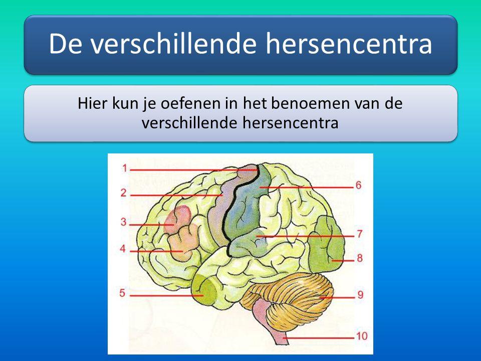 De verschillende hersencentra Hier kun je oefenen in het benoemen van de verschillende hersencentra