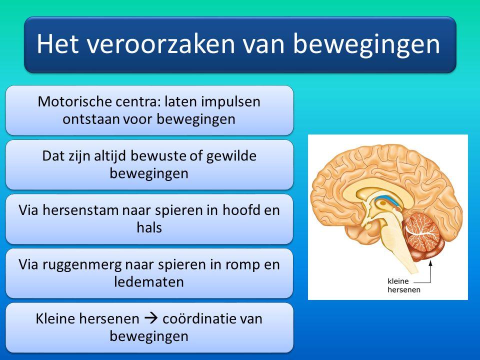 Het veroorzaken van bewegingen Motorische centra: laten impulsen ontstaan voor bewegingen Dat zijn altijd bewuste of gewilde bewegingen Via hersenstam naar spieren in hoofd en hals Via ruggenmerg naar spieren in romp en ledematen Kleine hersenen  coördinatie van bewegingen
