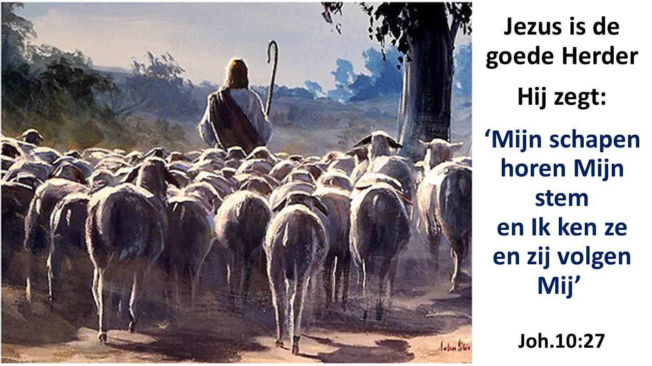 Jezus is de goede Herder Hij zegt: 'Mijn schapen horen Mijn stem en Ik ken ze en zij volgen Mij' Joh.10:27