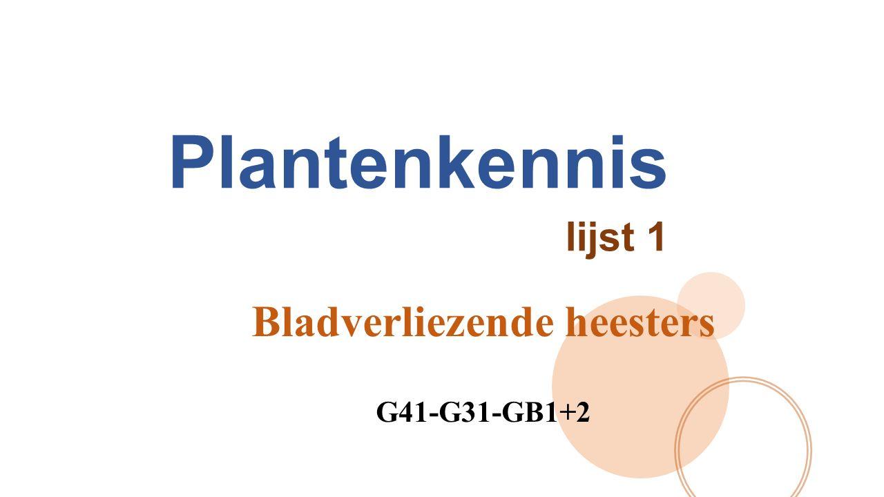Bladverliezende heesters Een heester is een plant met takken, al dan niet met een korte stam.
