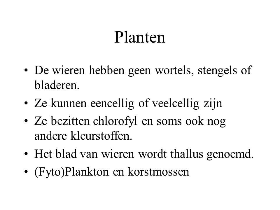 Planten Planten hebben celwanden om hun cellen. Planten bezitten chloroplasten. Planten zijn autotroof. Het plantenrijk wordt ingedeeld in vijf afdeli