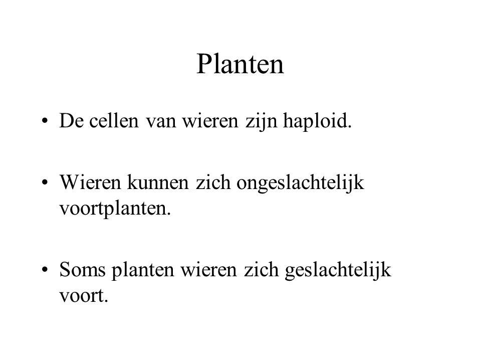 Planten De wieren hebben geen wortels, stengels of bladeren. Ze kunnen eencellig of veelcellig zijn Ze bezitten chlorofyl en soms ook nog andere kleur