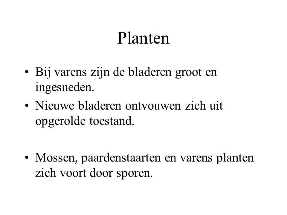 Planten Mossen hebben stengels en bladeren, maar geen echte wortels. We onderscheiden levermossen en bladmossen. Paardenstaarten en varens hebben wel
