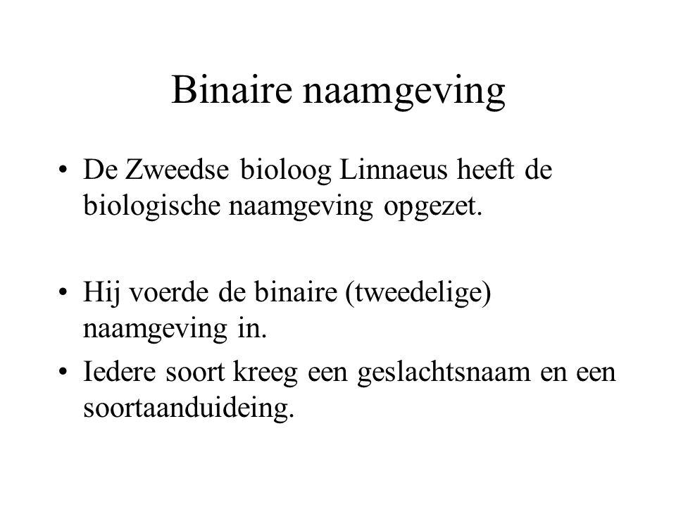 Binaire naamgeving De Zweedse bioloog Linnaeus heeft de biologische naamgeving opgezet.