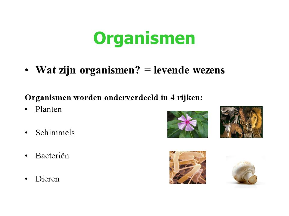 Organismen Wat zijn organismen? = levende wezens Organismen worden onderverdeeld in 4 rijken: Planten Schimmels Bacteriën Dieren