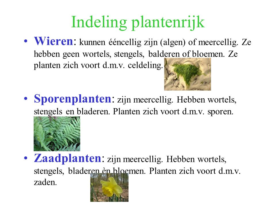 Indeling plantenrijk Wieren: kunnen ééncellig zijn (algen) of meercellig. Ze hebben geen wortels, stengels, balderen of bloemen. Ze planten zich voort