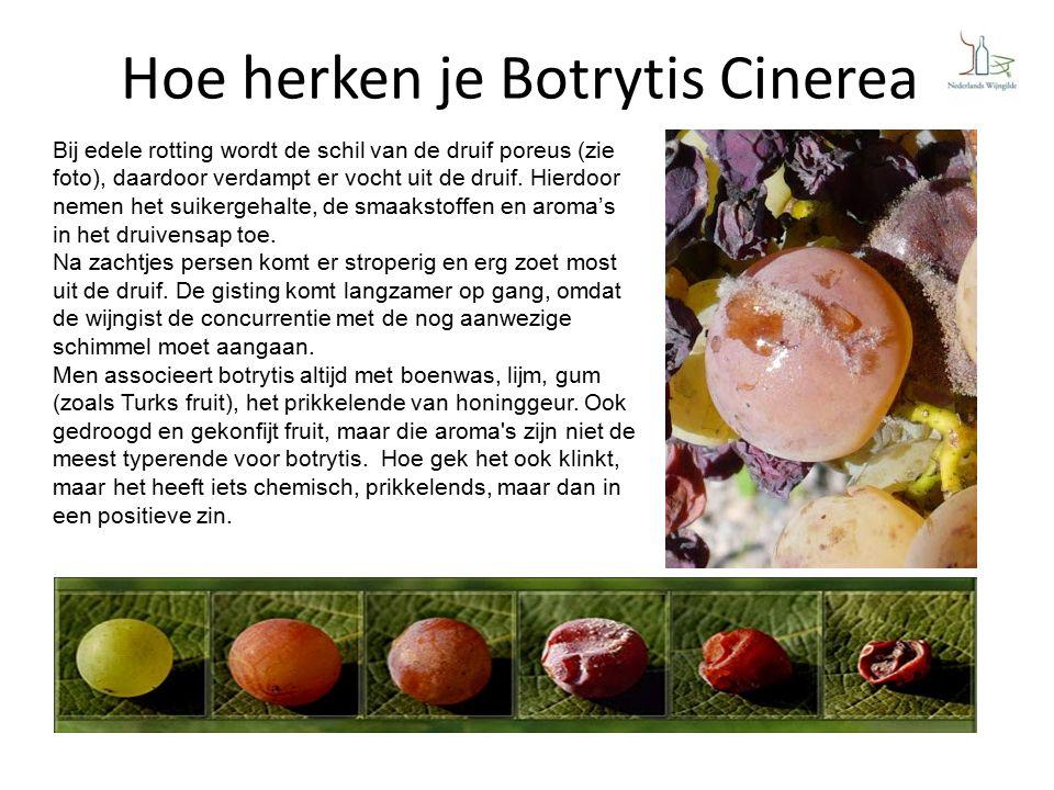 Hoe herken je Botrytis Cinerea Bij edele rotting wordt de schil van de druif poreus (zie foto), daardoor verdampt er vocht uit de druif.
