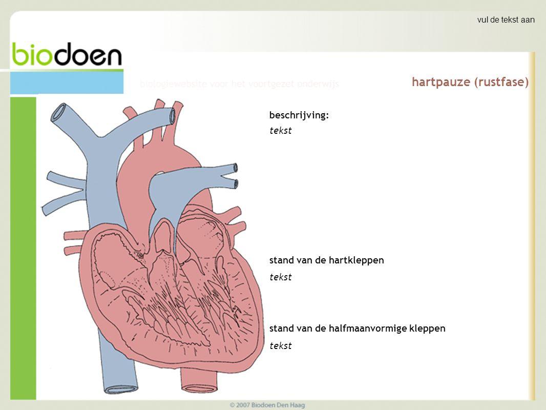 vul de tekst aan hartpauze (rustfase) beschrijving: tekst stand van de hartkleppen tekst stand van de halfmaanvormige kleppen tekst