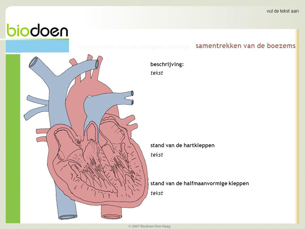 vul de tekst aan samentrekken van de kamers beschrijving: tekst stand van de hartkleppen tekst stand van de halfmaanvormige kleppen tekst