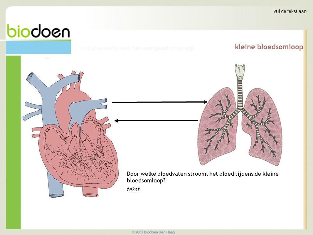kleine bloedsomloop Door welke bloedvaten stroomt het bloed tijdens de kleine bloedsomloop.