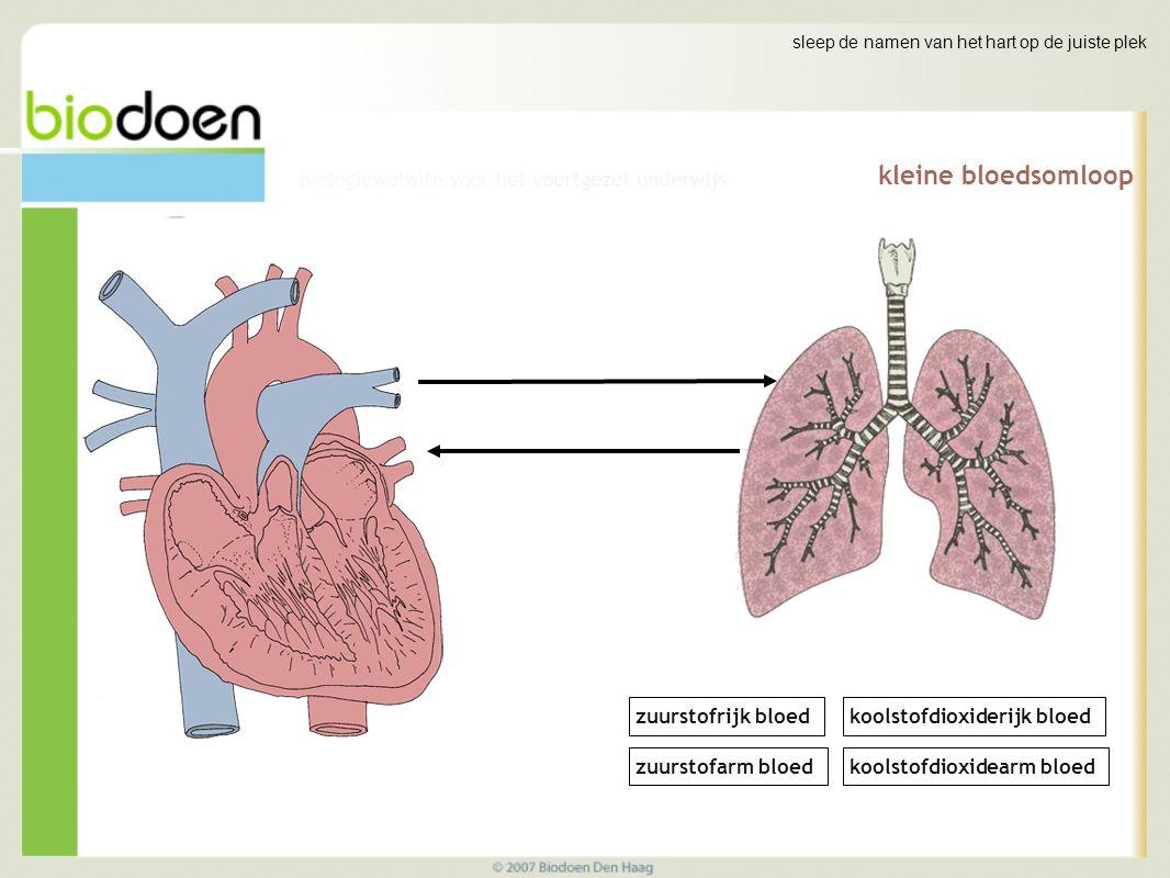 kleine bloedsomloop sleep de namen van het hart op de juiste plek zuurstofrijk bloed zuurstofarm bloed koolstofdioxiderijk bloed koolstofdioxidearm bloed