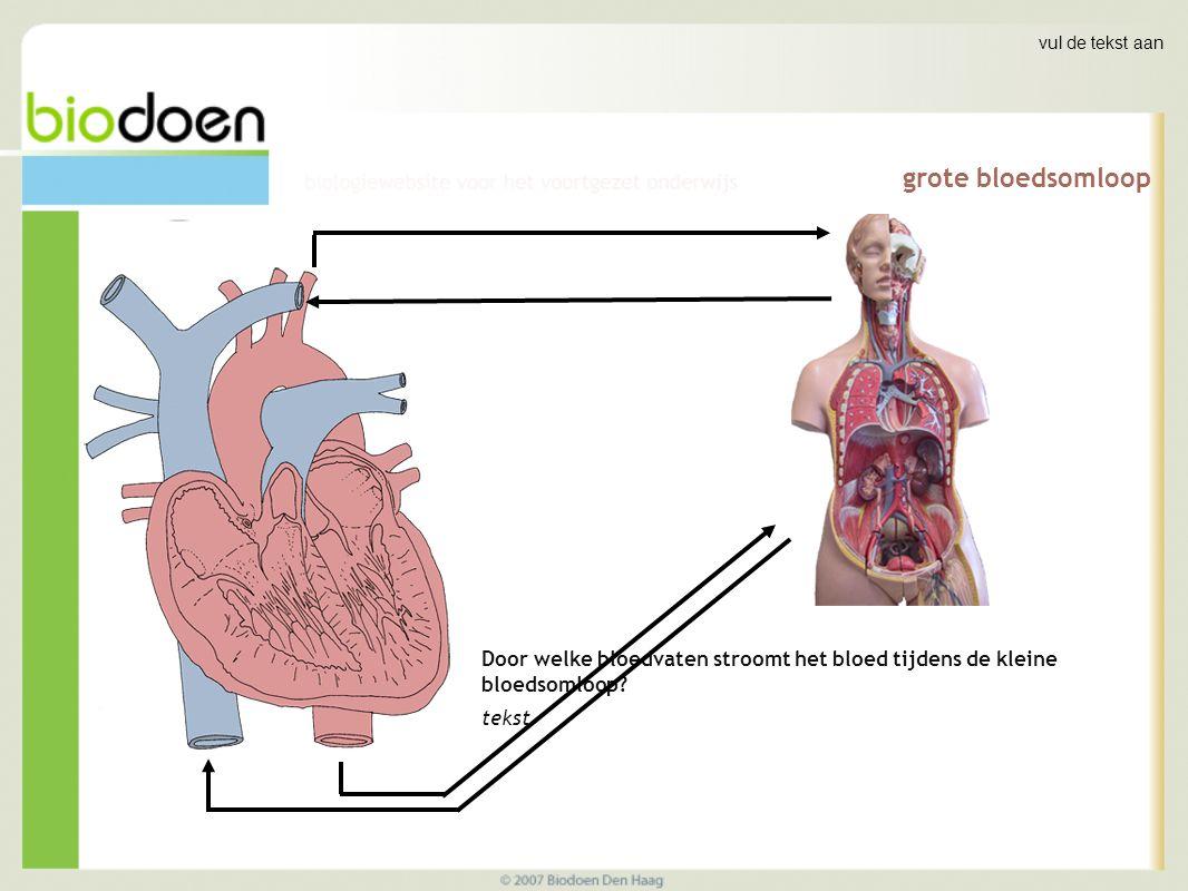 grote bloedsomloop Door welke bloedvaten stroomt het bloed tijdens de kleine bloedsomloop.