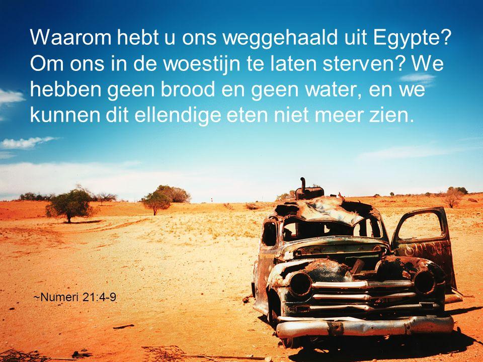 Waarom hebt u ons weggehaald uit Egypte? Om ons in de woestijn te laten sterven? We hebben geen brood en geen water, en we kunnen dit ellendige eten n