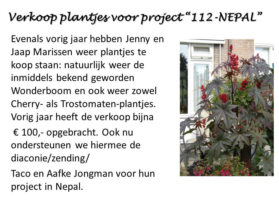 Evenals vorig jaar hebben Jenny en Jaap Marissen weer plantjes te koop staan: natuurlijk weer de inmiddels bekend geworden Wonderboom en ook weer zowel Cherry- als Trostomaten-plantjes.