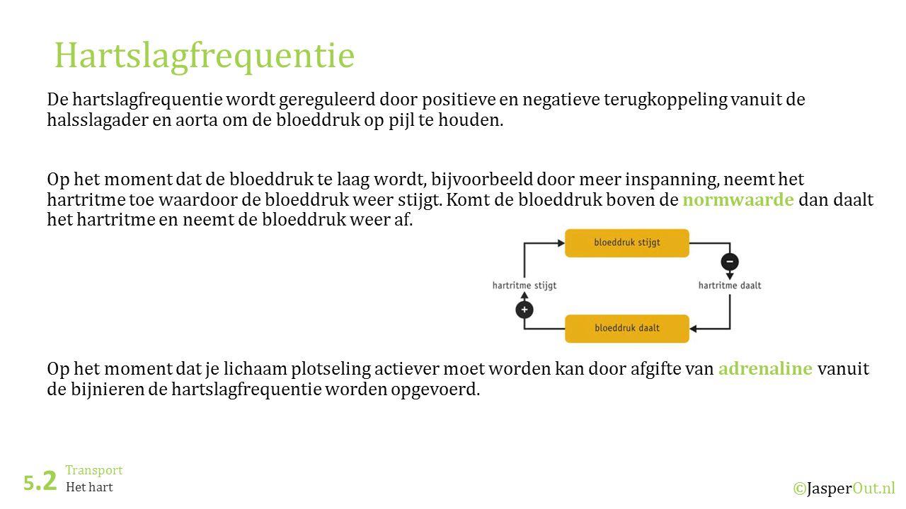 Transport 5.2 ©JasperOut.nl Het hart Hartslagfrequentie De hartslagfrequentie wordt gereguleerd door positieve en negatieve terugkoppeling vanuit de halsslagader en aorta om de bloeddruk op pijl te houden.