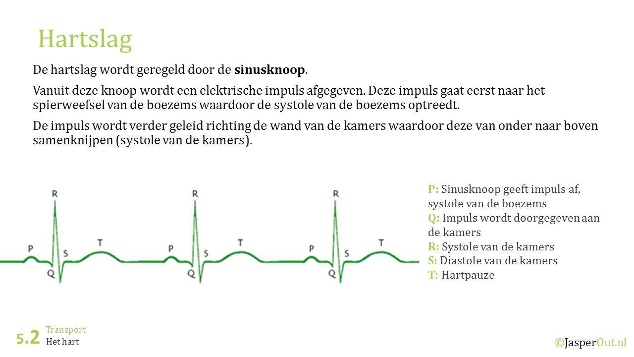 Transport 5.2 ©JasperOut.nl Het hart Hartslag De hartslag wordt geregeld door de sinusknoop. Vanuit deze knoop wordt een elektrische impuls afgegeven.