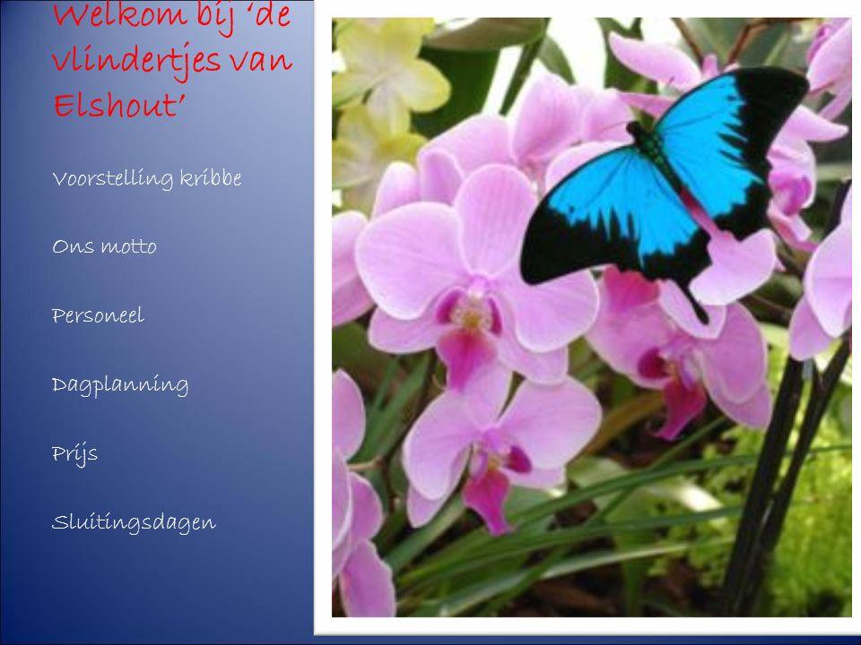 Welkom bij 'de vlindertjes van Elshout' Voorstelling kribbe Ons motto Personeel Dagplanning Prijs Sluitingsdagen