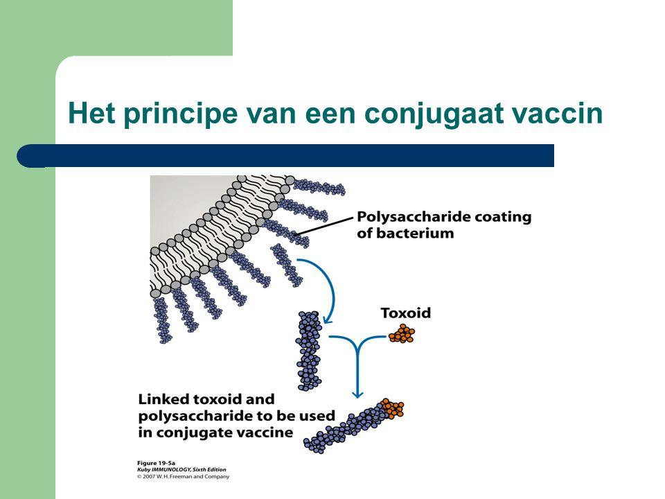 Het principe van een conjugaat vaccin