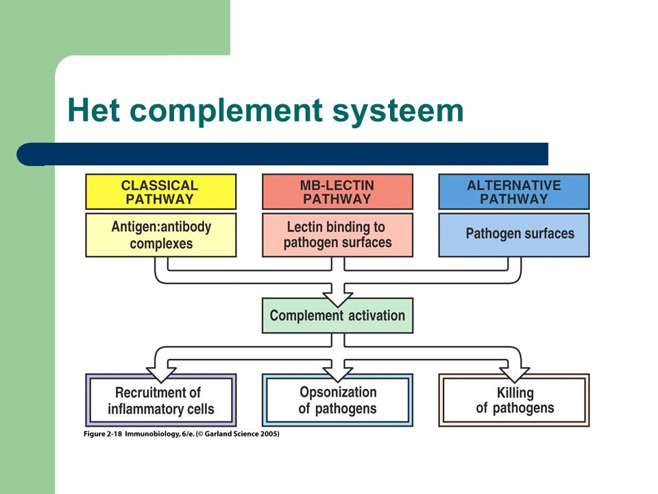 Het complement systeem