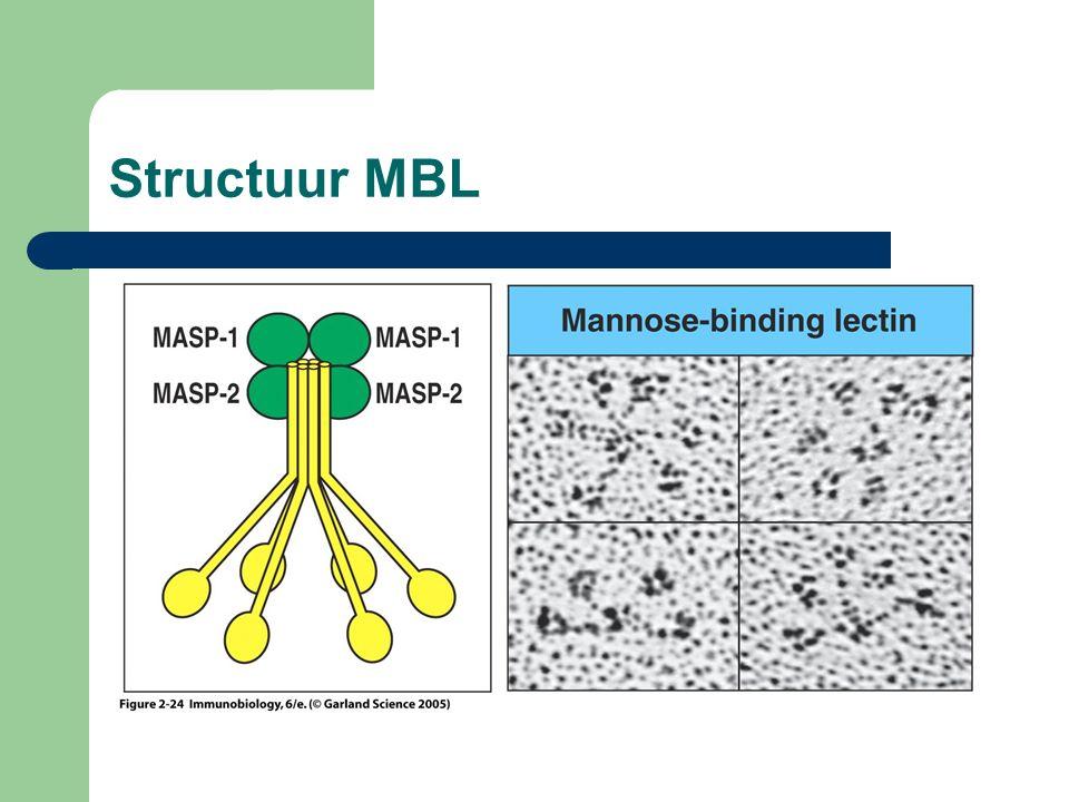 Structuur MBL
