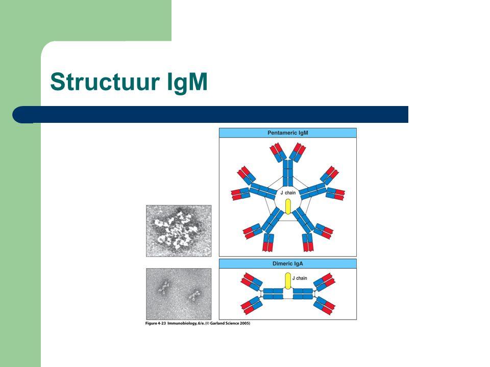 Structuur IgM