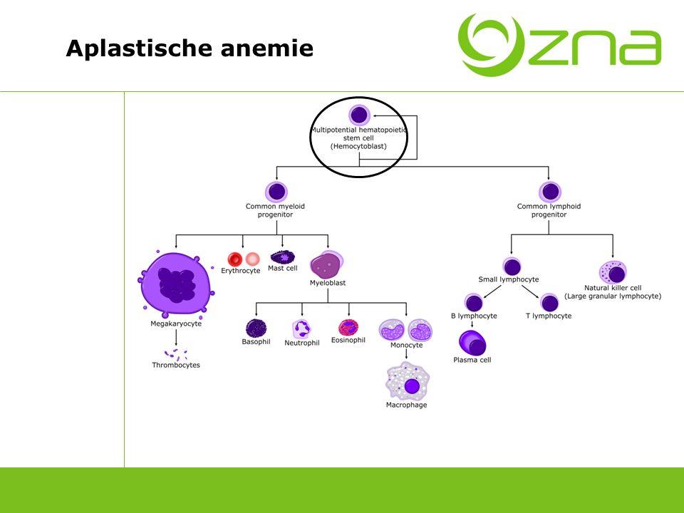 Aplastische anemie