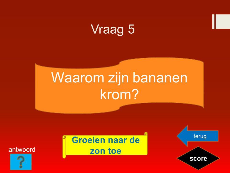 Vraag 5 Waarom zijn bananen krom? score Groeien naar de zon toe terug antwoord