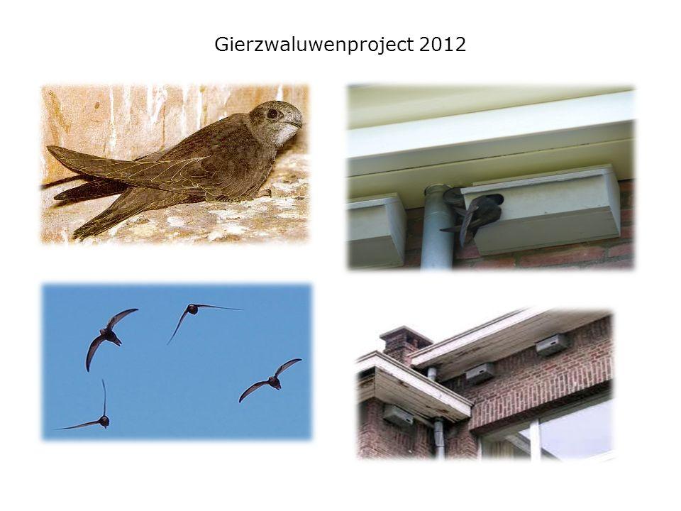 Gierzwaluwenproject 2012