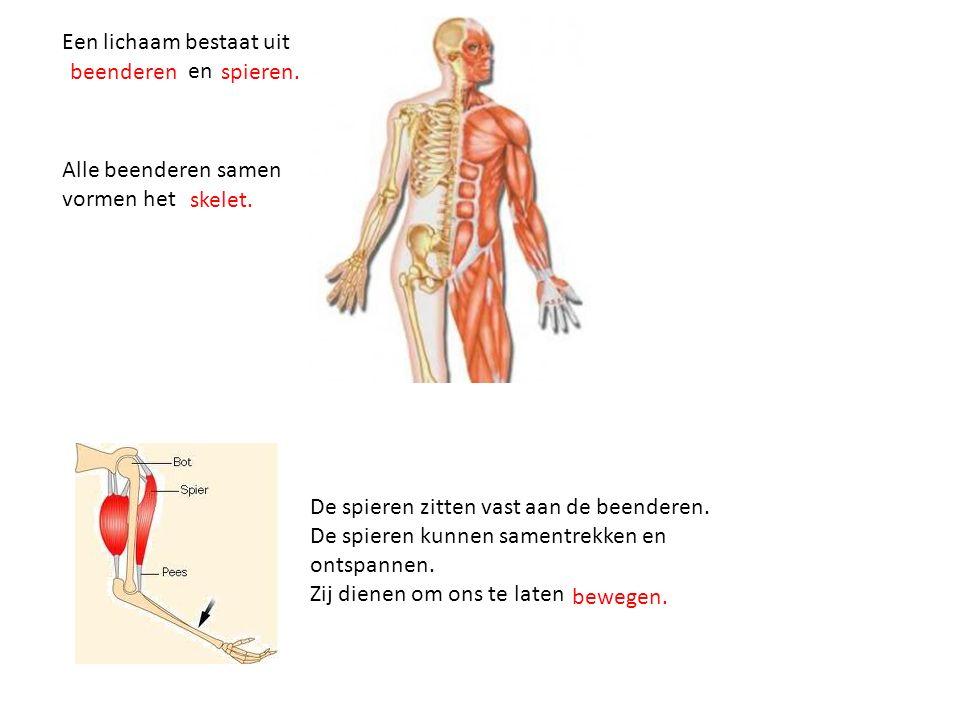 Een lichaam bestaat uit en De spieren zitten vast aan de beenderen. De spieren kunnen samentrekken en ontspannen. Zij dienen om ons te laten beenderen