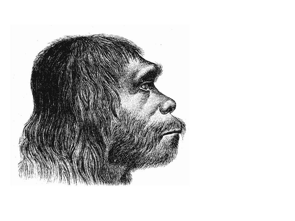 Homo Sapiens 'De wetende mens' 137.000 vCh in Afrika.