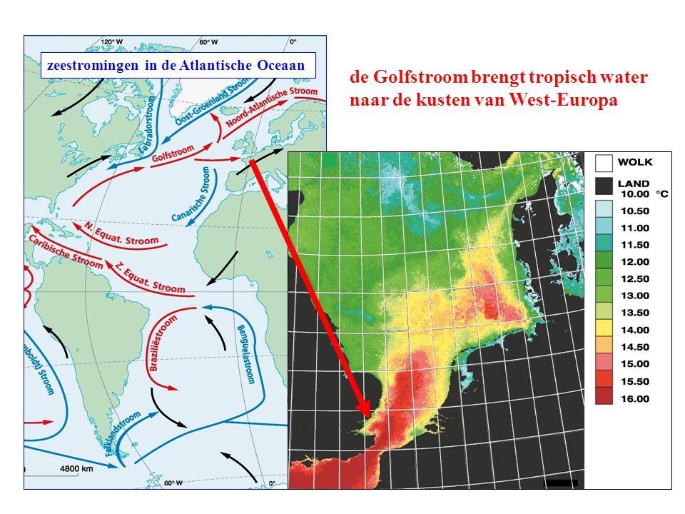 zeestromingen in de Atlantische Oceaan de Golfstroom brengt tropisch water naar de kusten van West-Europa
