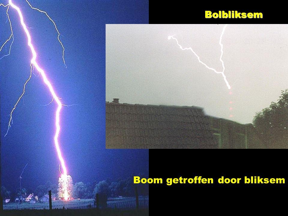 Bolbliksem Boom getroffen door bliksem