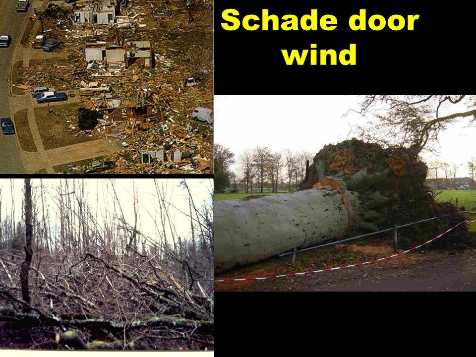 Schade door wind