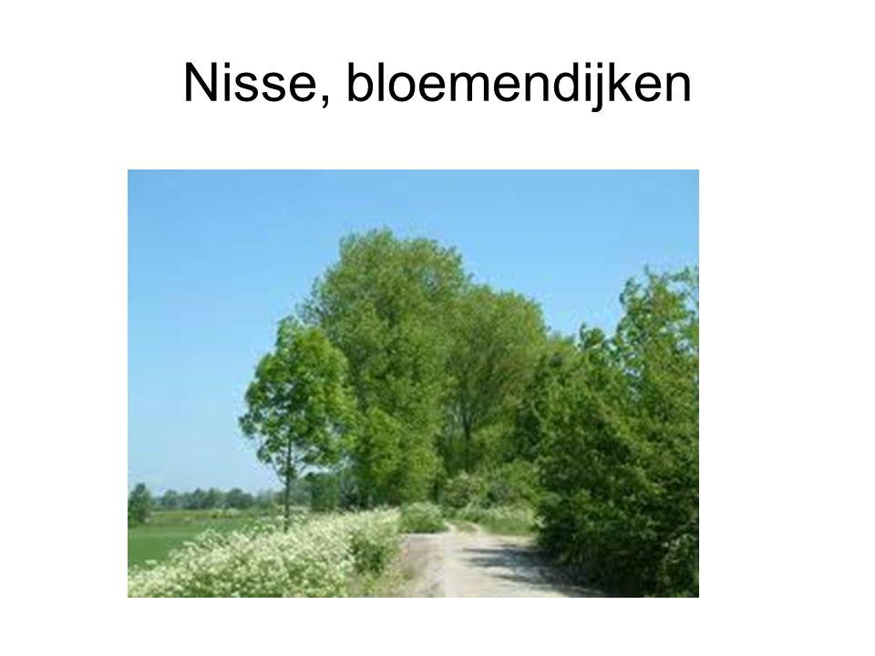 Nisse, bloemendijken