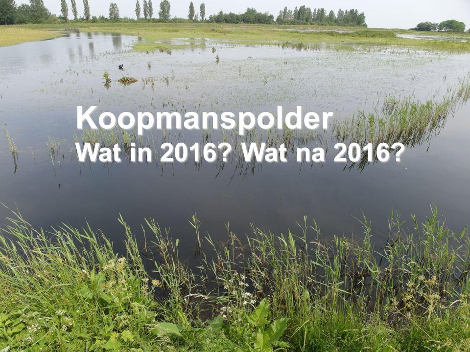 30 mei 2016 Koopmanspolder Wat in 2016 Wat na 2016