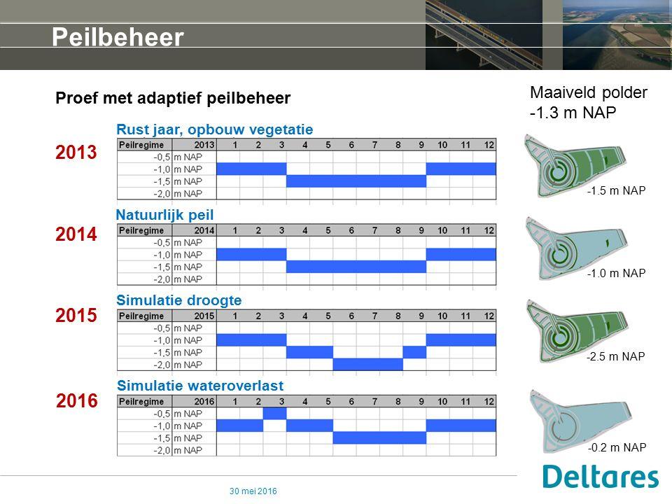 30 mei 2016 Peilbeheer Proef met adaptief peilbeheer 2013 2014 2015 2016 Rust jaar, opbouw vegetatie Simulatie droogte Simulatie wateroverlast Natuurlijk peil Maaiveld polder -1.3 m NAP -1.0 m NAP -2.5 m NAP -0.2 m NAP -1.5 m NAP