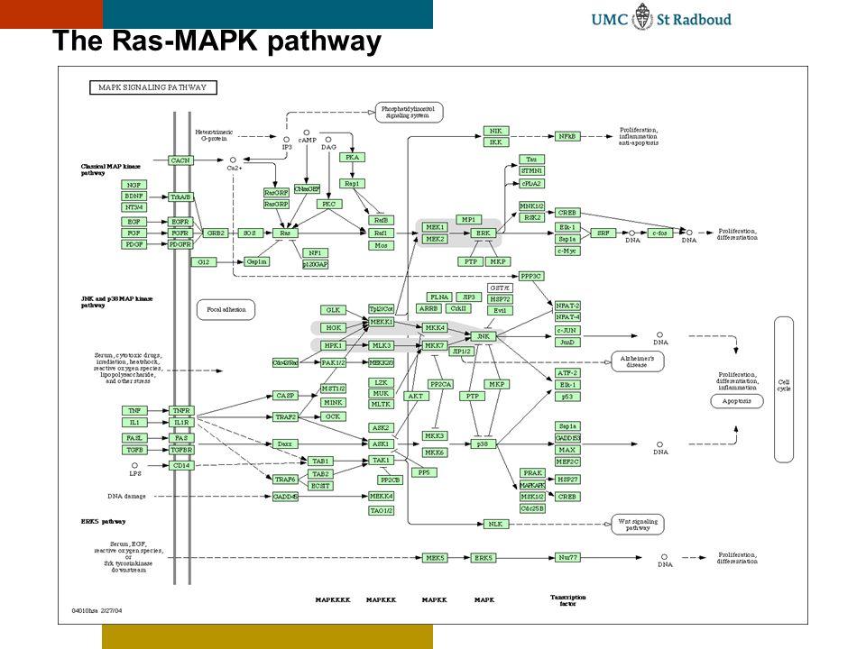 The Ras-MAPK pathway