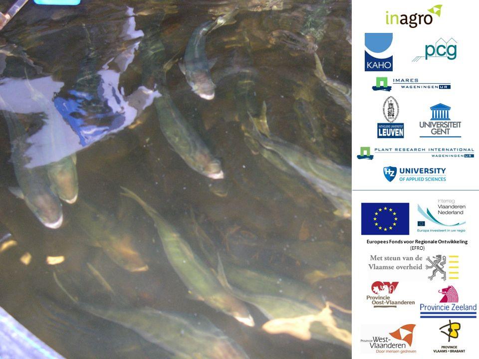 Bedrijf dat pootvis gaat produceren vanaf 2013, initiatief Jiri Bossuyt.