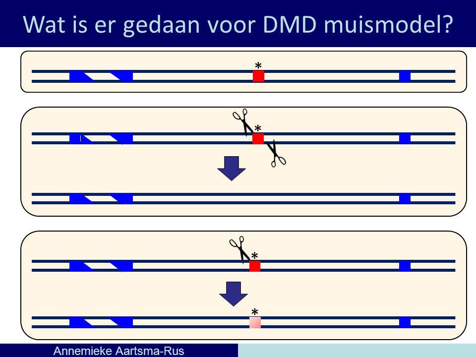 Wat is er gedaan voor DMD muismodel Annemieke Aartsma-Rus * * * *