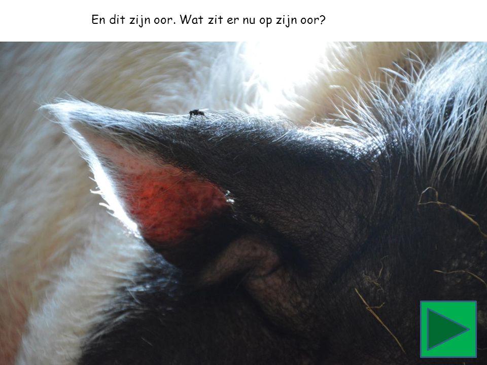 En dit zijn oor. Wat zit er nu op zijn oor?
