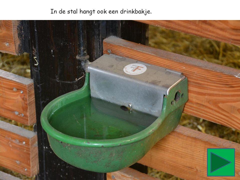 In de stal hangt ook een drinkbakje.