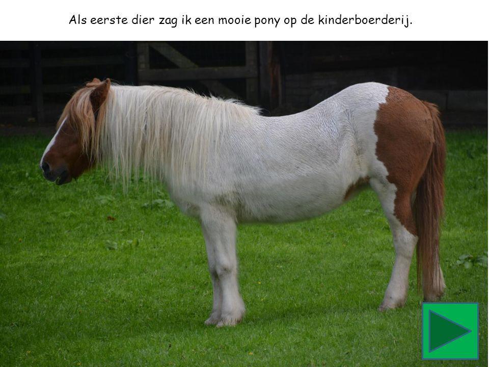 Als eerste dier zag ik een mooie pony op de kinderboerderij.