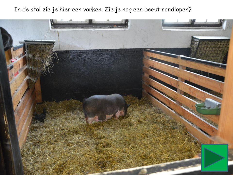 In de stal zie je hier een varken. Zie je nog een beest rondlopen?