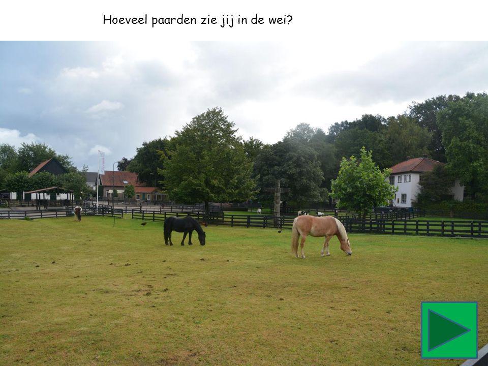 Hoeveel paarden zie jij in de wei?