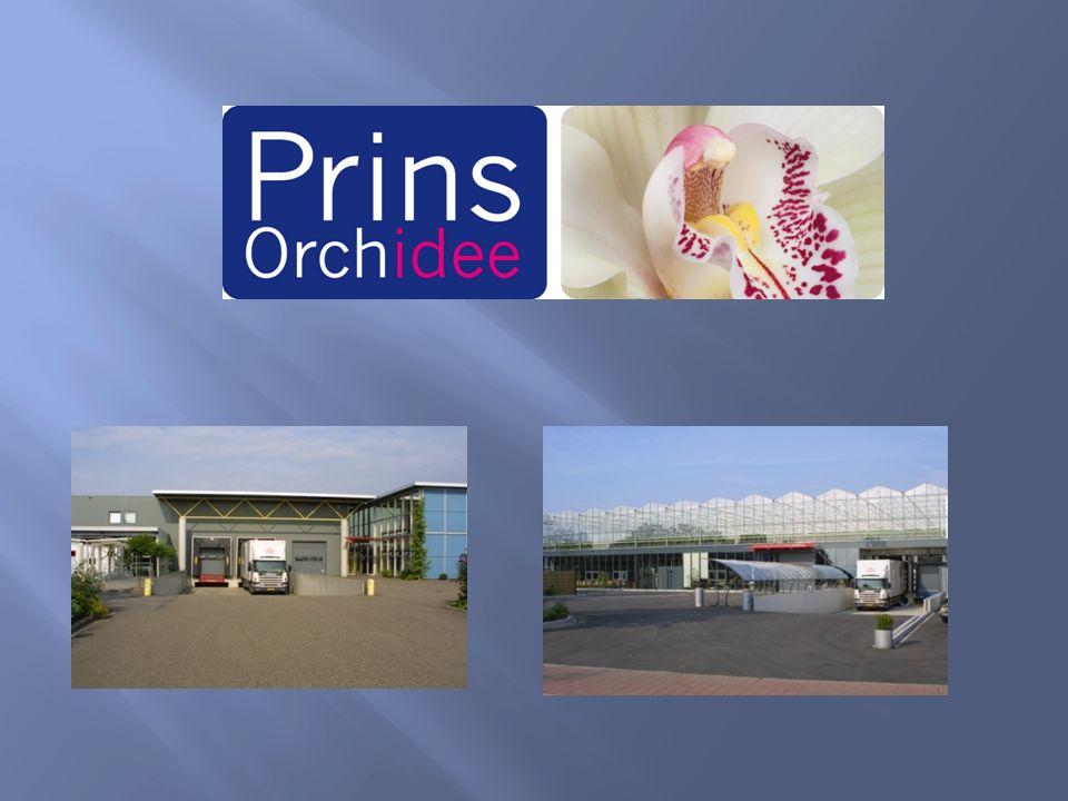 Adviesvraag  Welke directiesamenstelling is voor Prins Orchidee het meest effectief.