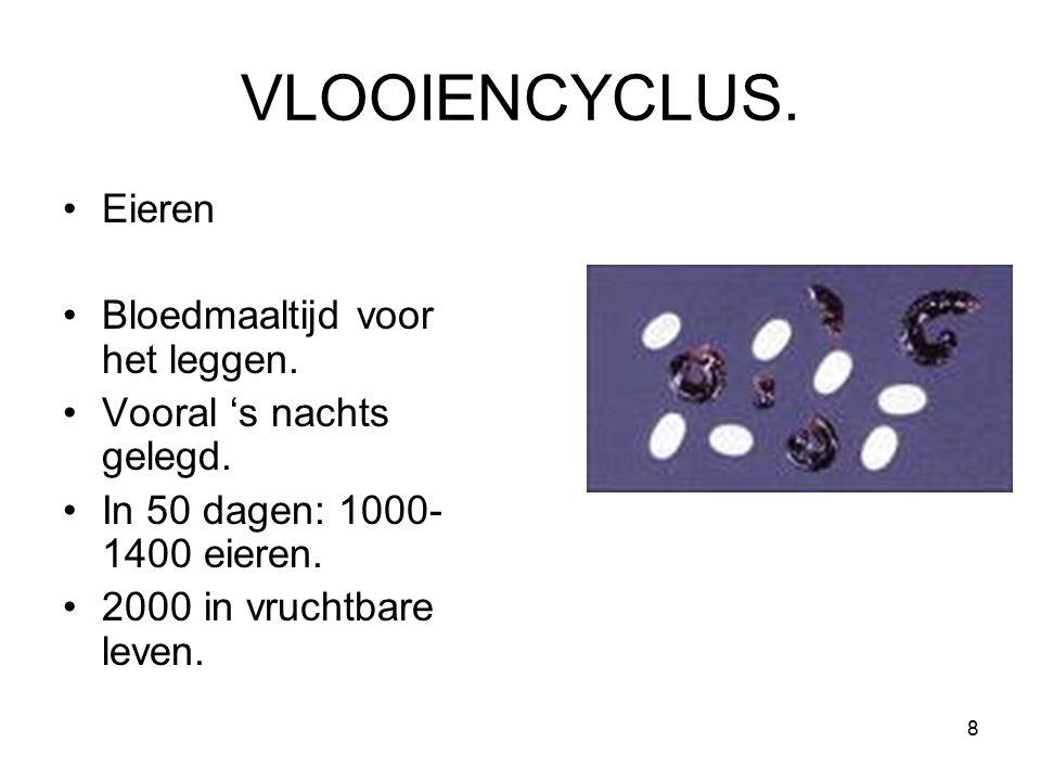 VLOOIENCYCLUS. Eieren Bloedmaaltijd voor het leggen. Vooral 's nachts gelegd. In 50 dagen: 1000- 1400 eieren. 2000 in vruchtbare leven. 8