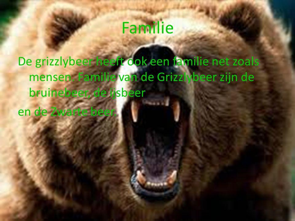 Familie De grizzlybeer heeft ook een familie net zoals mensen.