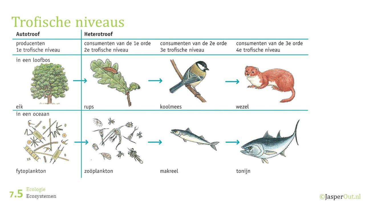 Ecologie 7.5 ©JasperOut.nl Ecosystemen Trofische niveaus