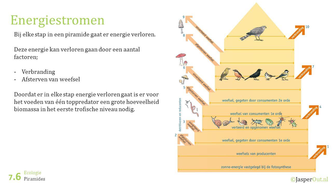 Ecologie 7.6 ©JasperOut.nl Piramides Energiestromen Bij elke stap in een piramide gaat er energie verloren.